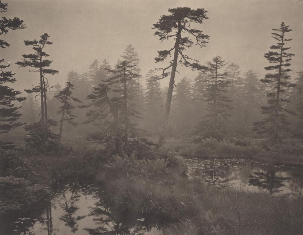 Silent Respiration of Forests - Hokkaido. Ukishima #1, 2011. Platinum print on Gampi paper. Es. 6:9. cm 26,5x34